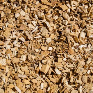 Biomass & Biofuel